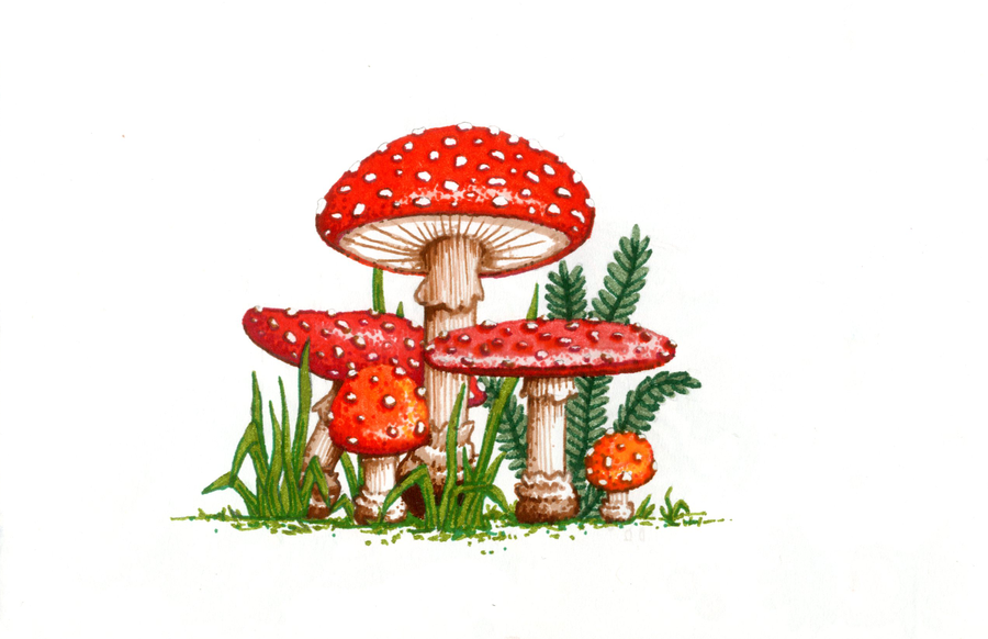 page_12__amanita_muscaria_by_theater-d4x91w1