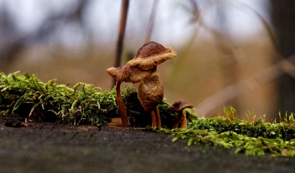 Wyszedł Z Domu: Świąteczny Atlas grzybów ...