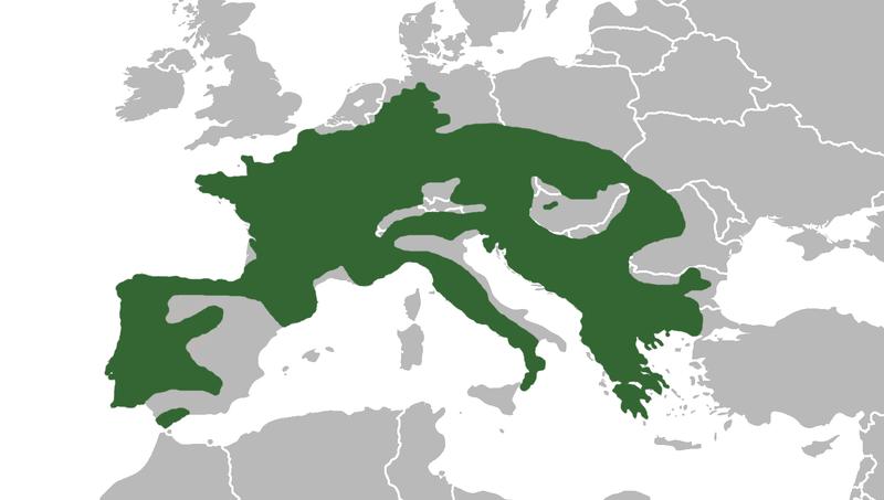 źródło: www.wikipedia.org (jak widać wikipedia nie posiada rzetelnych informacji)